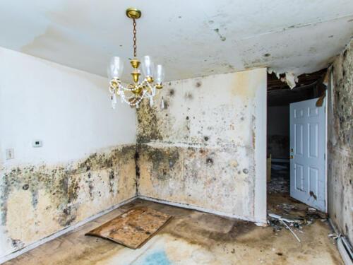 mold-damage3-2
